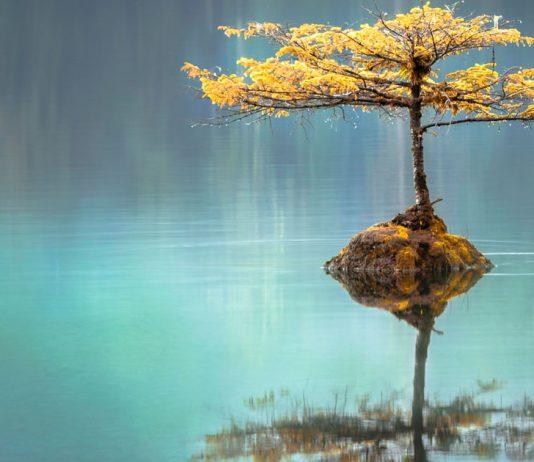 a-calma-nao-sobrevive-a-escuridao-precisa-de-luz-para-se-tornar-plenitude