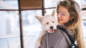 cães-acariciar-estresse
