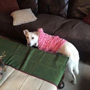 cachorro-novo-dono