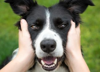 ciencia-diz-que-acariciar-seu-gato-ou-cachorro-pode-aliviar-o-estresse-em-poucos-minutos