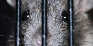 colombia-proibi-testes-de-cosmeticos-em-animais-decisao-historica
