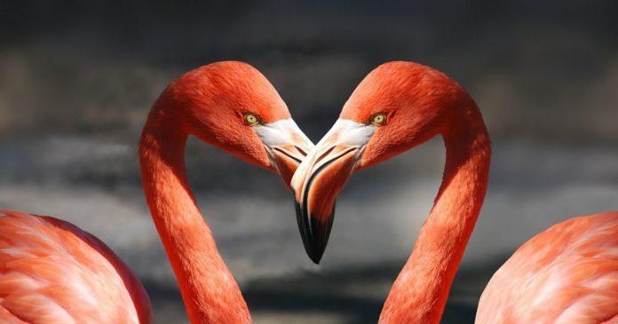 sobre-amor-reciproco-no-inicio-a-expectativa-e-grande-em-relacao-ao-amor
