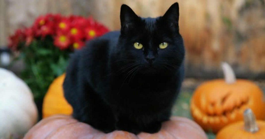 gatos-pretos-sao-mensageiros-divinos-anjos-animais-guias-espirituais-e-totens