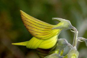 a-natureza-revela-suas-formas