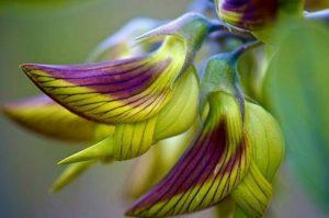 beija-flor-em-uma-flor