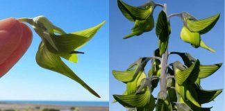 esta-planta-parece-um-beija-flor-a-natureza-e-realmente-bela-e-nunca-para-de-nos-surpreender