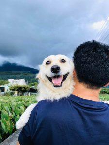 cão-adoravel