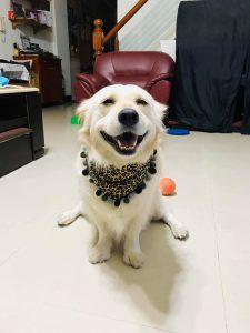 cão-mais-fofo