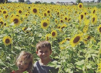 fazendeiro-planta-2-milhoes-de-girassois-pra-pessoas-voltarem-a-sorrir