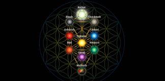 arvore-da-vida-10-caminhos-para-conquistar-a-liberdade-pessoal-e-a-transformacao