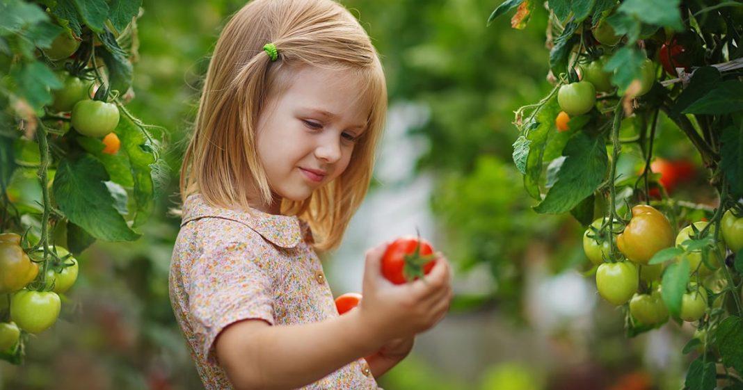 novo-estudo-mostra-que-jardins-melhoraram-o-sistema-imunologico-de-criancas-em-apenas-um-mes