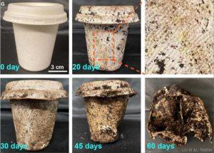 produtos-biodegradaveis