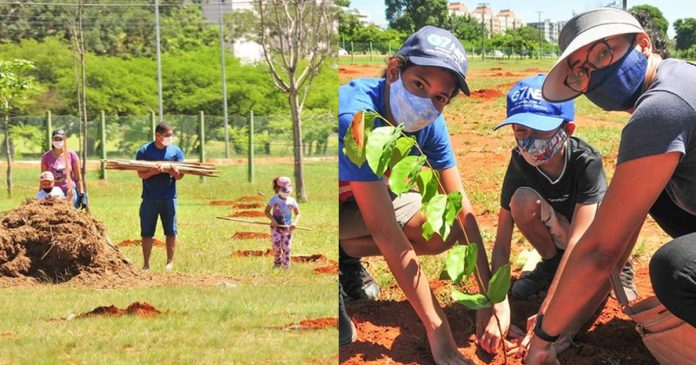 brasil-esta-construindo-o-maior-corredor-para-abelhas-do-mundo
