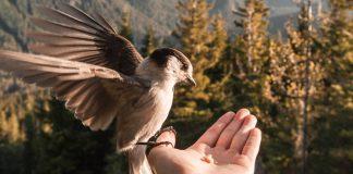 encontre-a-paz-em-seu-coracao-que-a-paz-na-mente-vira