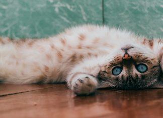 animais-podem-ajudar-a-diminuir-a-ansiedade-de-criancas-com-autismo
