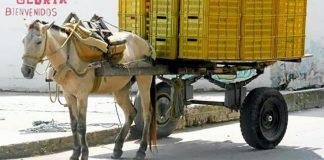 colombia-aprova-lei-que-proibe-veiculos-puxados-por-animais-no-pais
