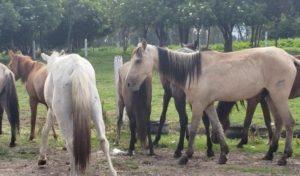 COLOMBIA-PROIBI-VEICULOS-DE-TRAÇÃO-ANIMAL-EM-TODO-TERRITORIO