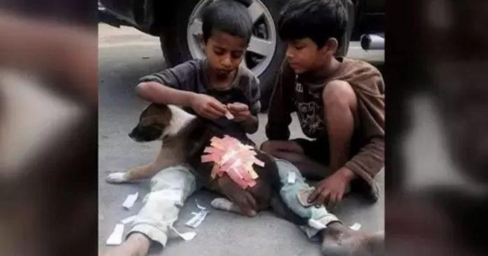 criancas-emocionam-web-ao-usar-band-aids-em-ferimento-de-cachorro