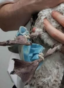 MÁSCARA-presas-nas-patas-da-gaivota