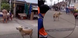 cachorro-abandonado-finge-estar-machucado-para-ganhar-comida-e-amor